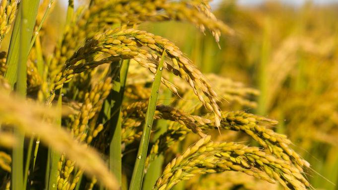 CSA社群支持农业CSA为您打开事业蓝海